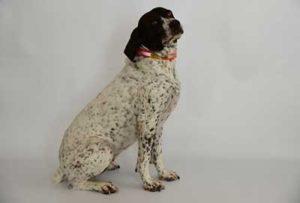 Daisy-Gilmore-the-family-dog